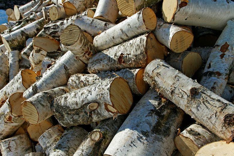 Ставропольцу грозит до двух лет тюрьмы за спил деревьев