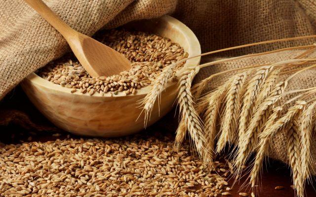 На Ставрополье официально зафиксировали рекорд по валовому намолоту зерна в этом году