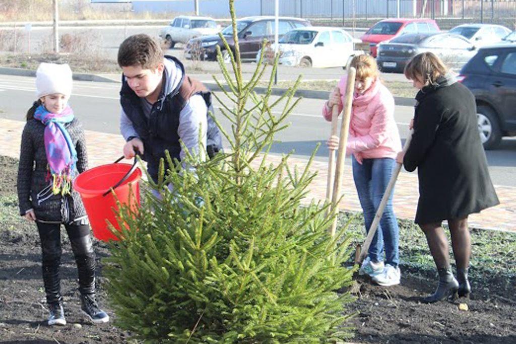 В Ставрополе за день высадили более пяти с половиной тысяч деревьев