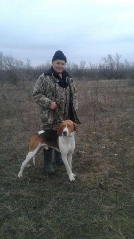 На Ставрополье испытывали собак гончих пород по зайцу-русаку и лисице