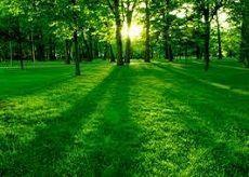 Масштабная экологическая акция пройдет в начале октября  в Ставрополе