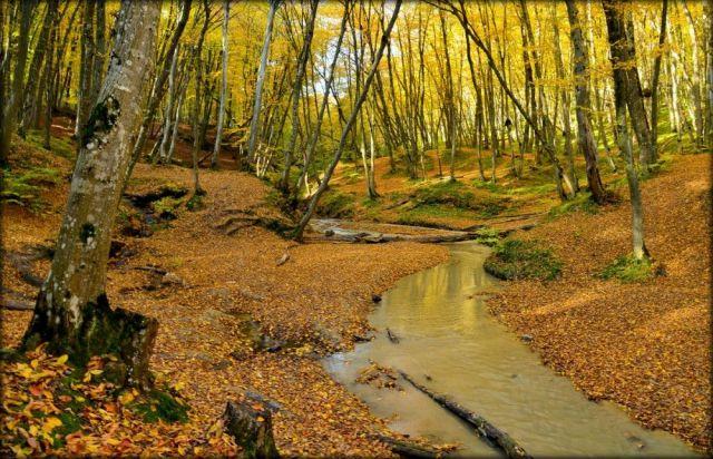 В Таманском лесу Ставрополя обустроят места отдыха