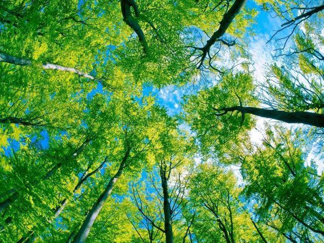 Экологическая обстановка на Ставрополье остаётся благоприятной
