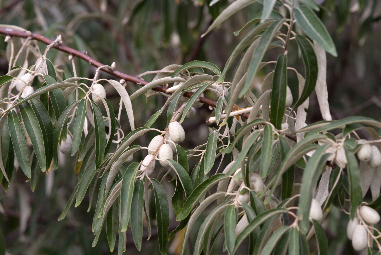 ВСтаврополе кконцу осени высадят 12 тыс. молодых деревьев