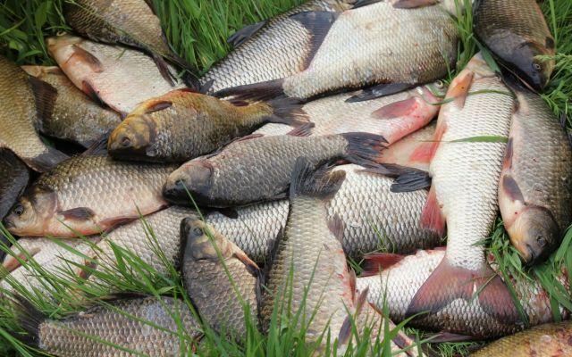 На Ставрополье браконьеры-рыбаки отправятся на обязательные работы