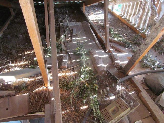 Житель Ставрополья выращивал во дворе дома марихуану