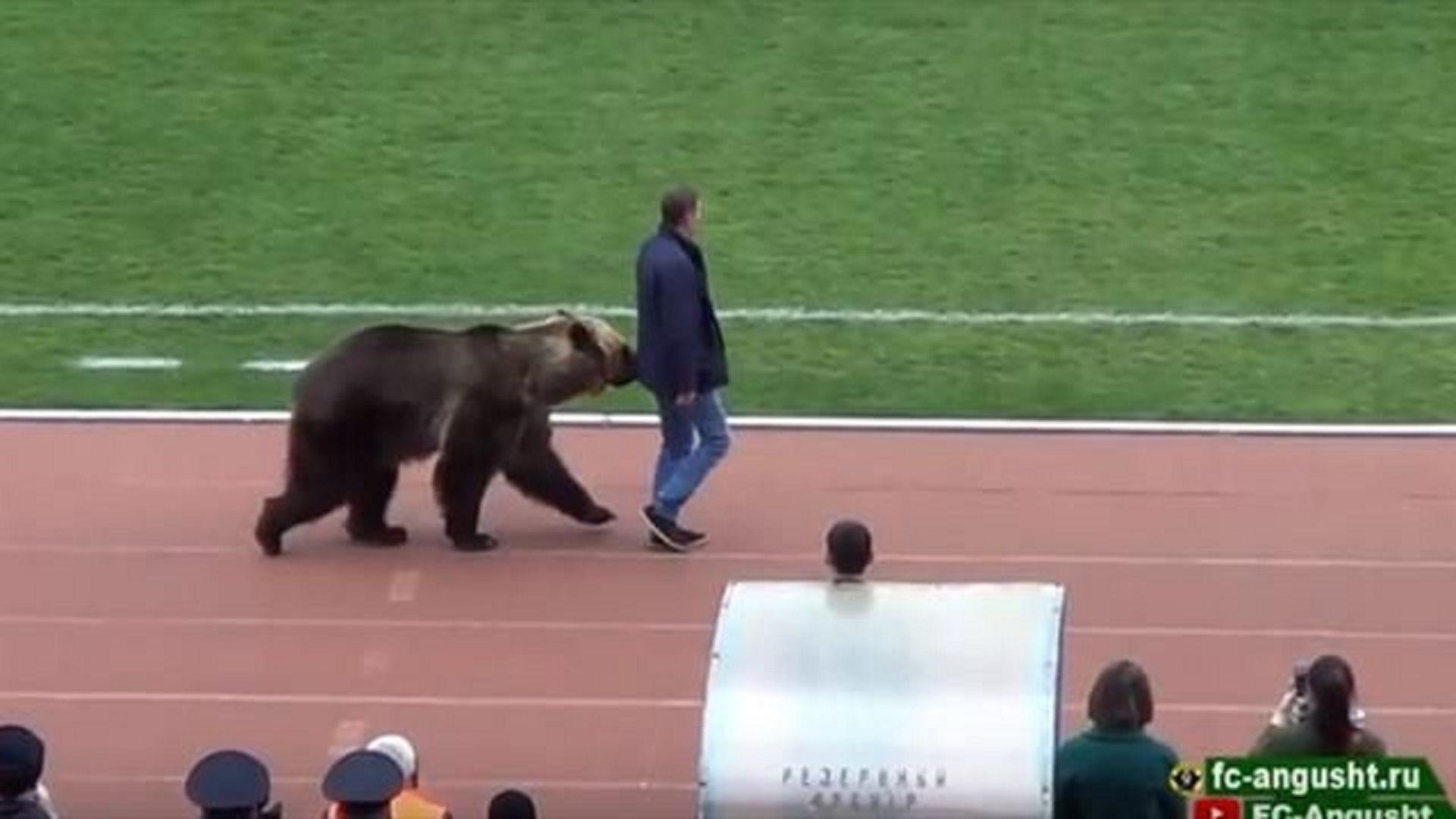 Медведь по кличке Тима открыл матч ПФЛ «Машук-КМВ» — «Ангушт»
