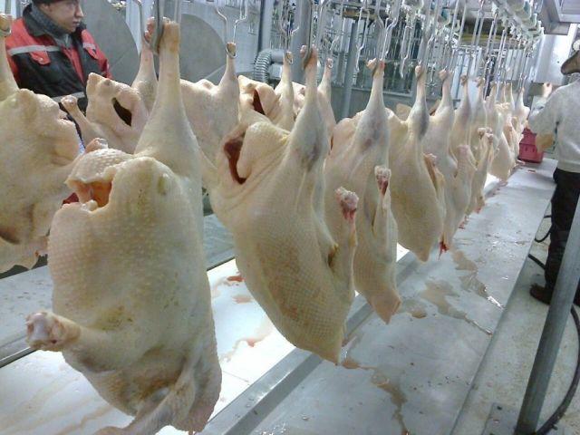 На Ставрополье производят мясо уток французской селекции