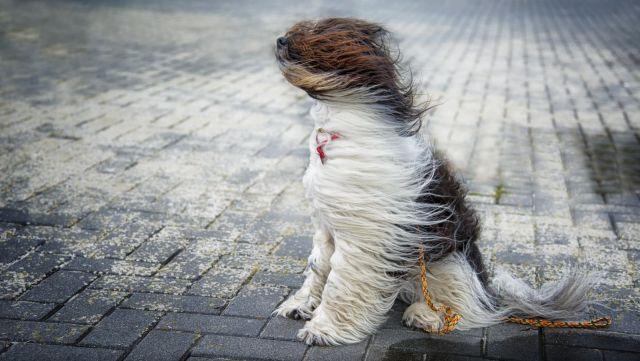 В выходные на Ставрополье ожидается сильный ветер