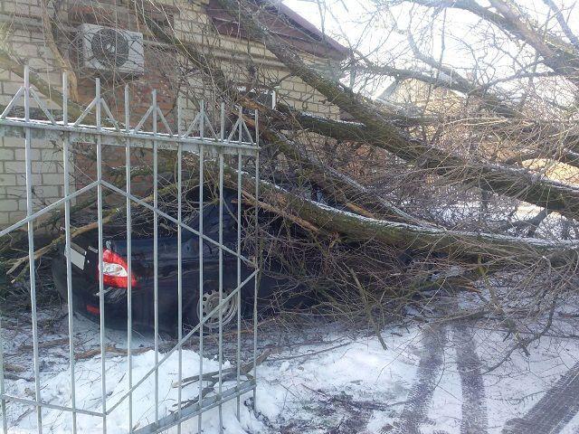 На Ставрополье на припаркованные машины рухнул 15-метровый вяз