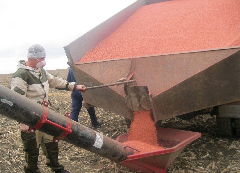 В Новоселицком районе почти завершили сев озимых культур