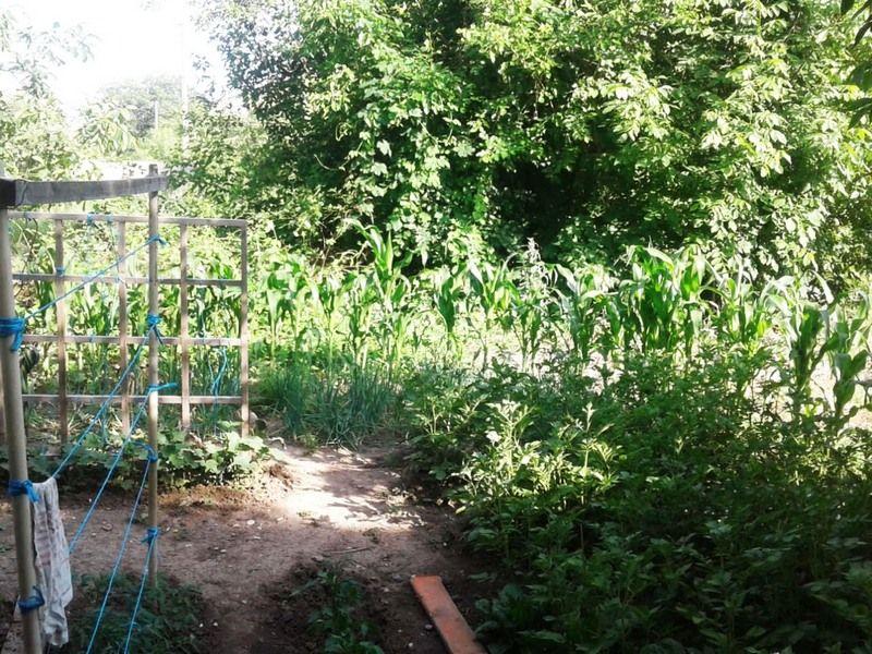 На Ставрополье сторож выращивал коноплю на территории охраняемого предприятия