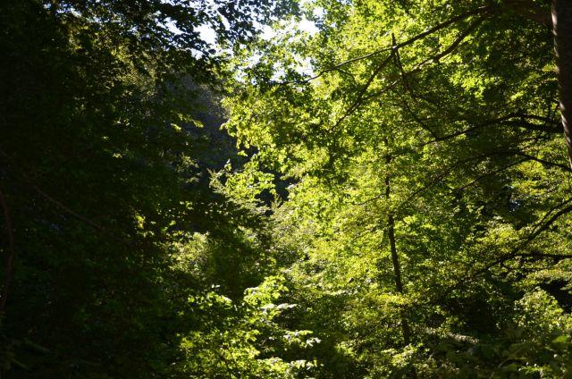 Ставропольский «Русский лес» увеличился более чем на 15 гектаров