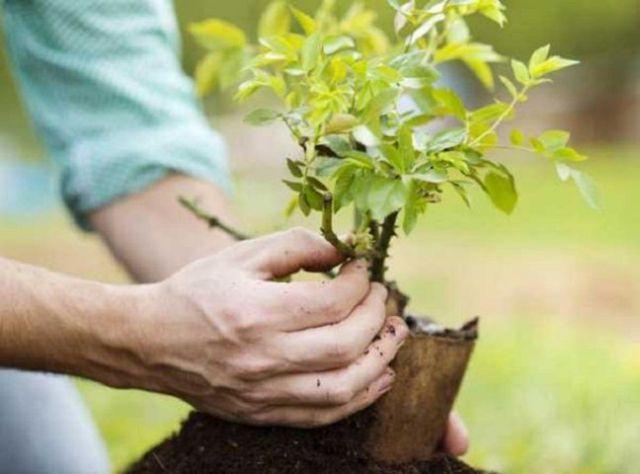 Ставрополец воровал саженцы деревьев из питомника для своего фруктового сада