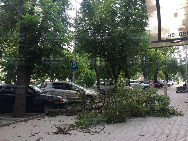 Ставропольский ветер свалил три дерева в краевом центре