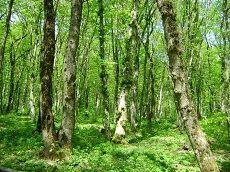 Весенний этап краевой экологической акции «Сохраним природу Ставрополья» набирает обороты