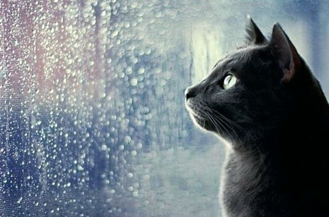 В выходные на Ставрополье ожидается пасмурная погода, местами дождь