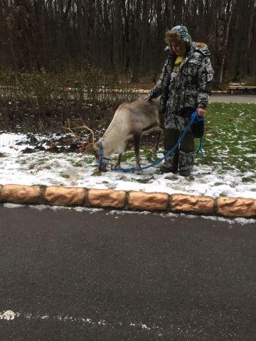 В Ставрополе мужчина выгуливал на поводке оленя
