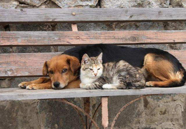 На Ставрополье проблему бродячих животных будут решать гуманно