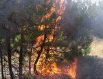 За неделю в Ставропольском крае сгорело 650 га леса