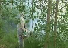 В Ставрополе продолжили борьбу с клещами и комарами