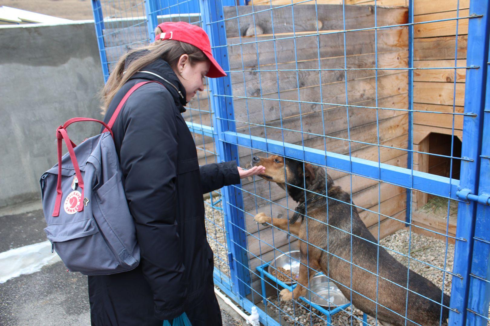 один самых ставропольский приют для животных фото показатель