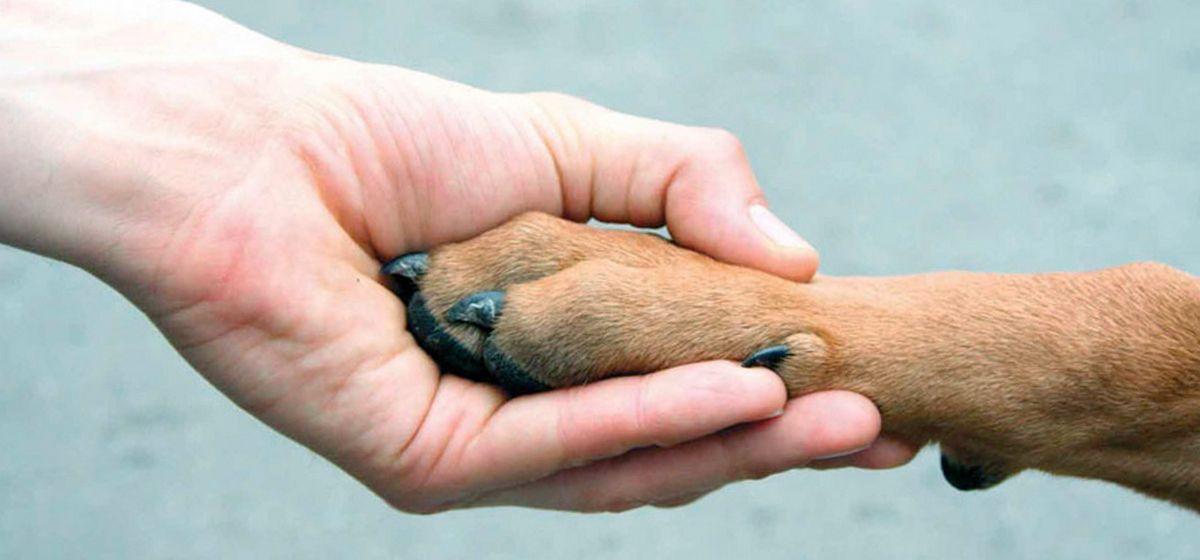 Помоги животным картинка